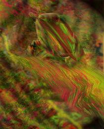 Amodrass by Charles Schneider