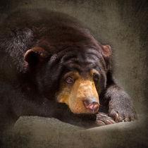Sun-bear0063a