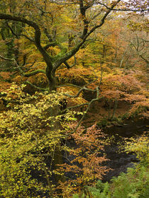 Autumn Colour by the River Teign, Dartmoor von Craig Joiner