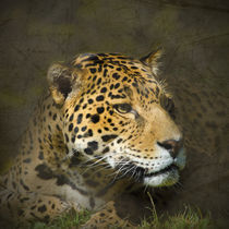 Leopard Portrait von Betty LaRue