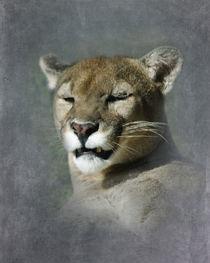 North American Cougar 2 von Betty LaRue