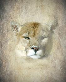 The Eye of the Mountain Lion von Betty LaRue