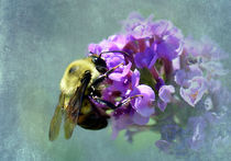 Bumblebee and Butterfly Bush by Betty LaRue