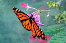 Monarch Butterfly on pink flower von Betty LaRue
