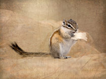 Least Chipmunk Eating Bread von Betty LaRue