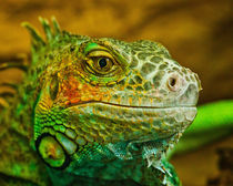 the look.Jurassic park