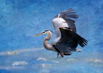 Great Blue Heron Fishing by Betty LaRue