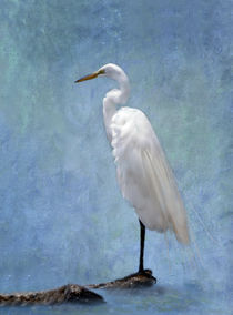 Great Egret on a Rock by Betty LaRue
