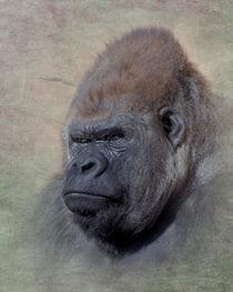 Western Lowland Gorilla, Gorilla gorilla von Betty LaRue
