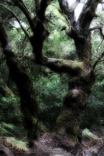 La Gomera - Urwald - Poster von Jens Berger