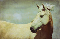 Horse portrait by Anne Staub