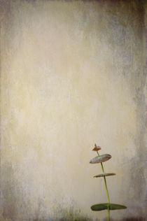 Pirouette von Anne Staub