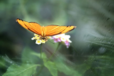 Schmetterling-orange-ab