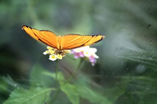 Schmetterling-orange-ab