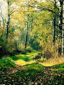 Path by Paula Jakobsson