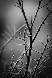 Winter Frost by Kellen Witschen