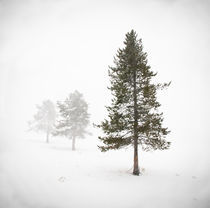 Depth of Winter von Kellen Witschen