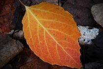 Single Leaf von Kellen Witschen