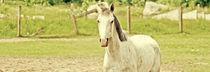 White Horse von Ernestas Martinkus
