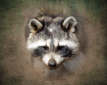 Raccoon 2 von Betty LaRue