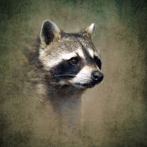 Raccoon 1 von Betty LaRue