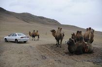 Mongolian landscape by Olga Shuruht