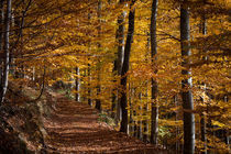 Herbstwald by Andreas Levi