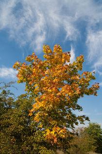Herbst von Andreas Levi
