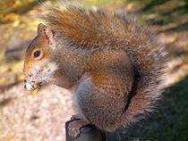 Eichhörnchen von Thomas Brandt