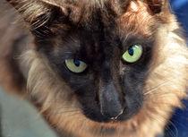Katze von Thomas Brandt
