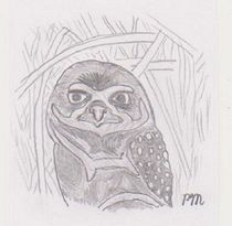 Burrowing Owl by Peter Myles
