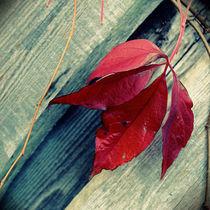 red leaf by tr-design