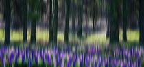 "Wildflower Walk ""Yosemite National Park"" von AERA NATURKINO"
