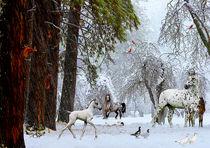 Serie Pferde Bild 01 von Klaus Lensch