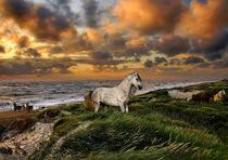 Serie Pferde Bild 02 von Klaus Lensch