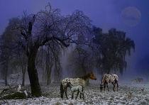 Serie Pferde Bild 03 von Klaus Lensch