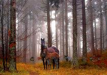 Serie Pferde Bild 04 von Klaus Lensch