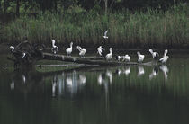 10-pelican-perch-crw-4909-copy