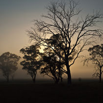 Armidale-tree-silhouette-cf031169