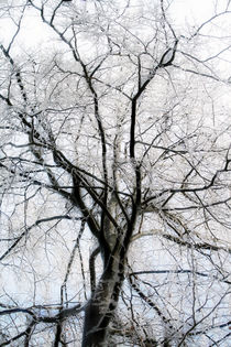 Baum - Winter - Eis by Jens Berger