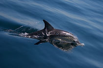 Dolphins-29082010-py7z9706
