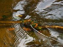 Stick-cedar-creekp1050833