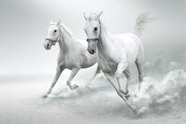 White horses  von Tanja Krstevska