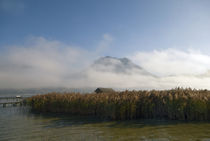 Enveloped in  Fog by dayle ann  clavin