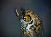 Great Horned Owl by Betty LaRue
