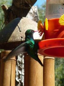 :: colibrí :: by Bárbara Greco