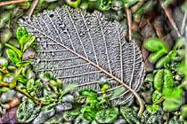 Das Blatt - the leaf von Harald Dotter