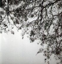 Serie Jacarandá I by Sophie Starzenski