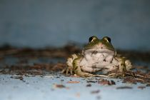 Frog in a Pool by David Robinson