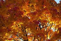 Autumn Colours von safaribears